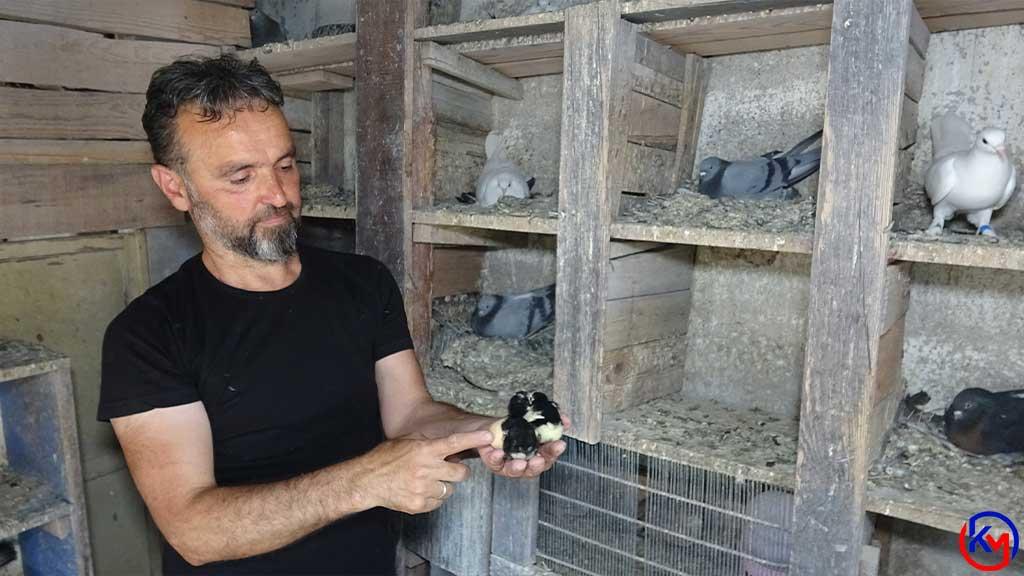 Kuluçka Döneminde Güvercinin Altına Tavuk Yumurtası Koyarsanız Ne Olur?